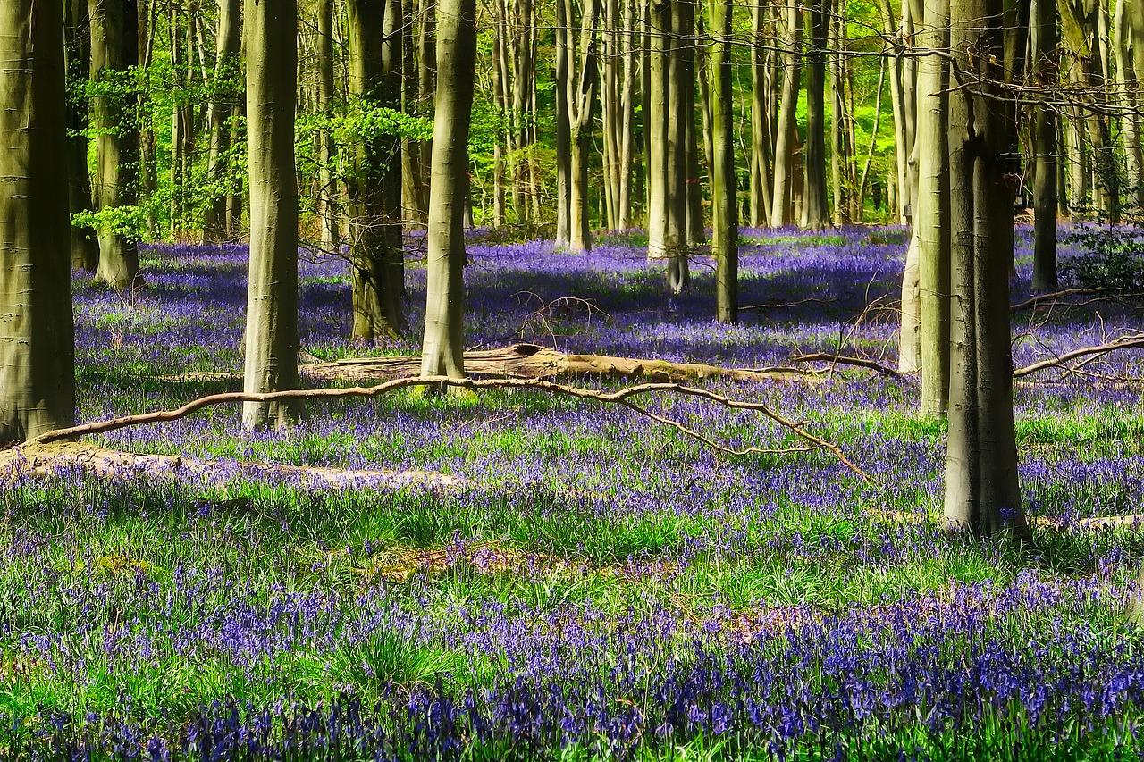 Erdőfürdő - Több mint egy séta